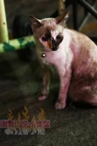 ムーガタ屋の猫