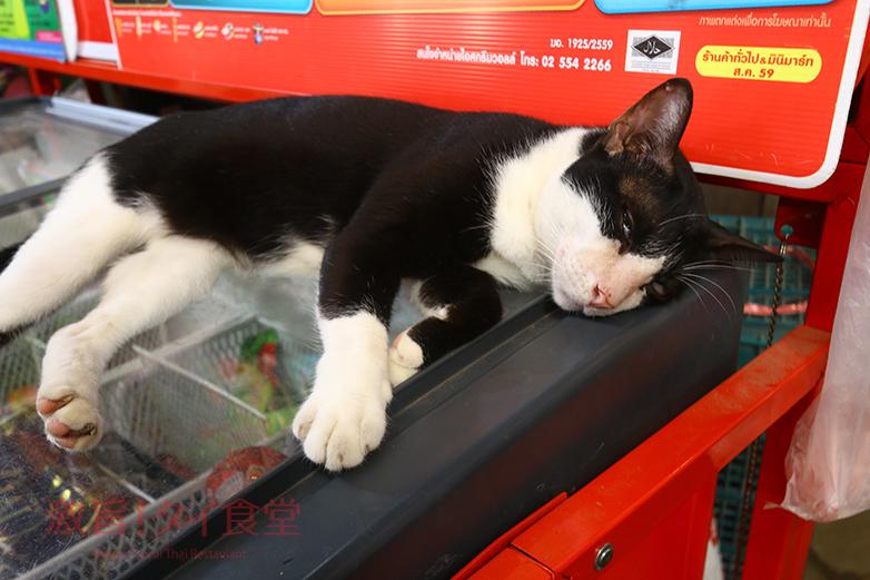 タラート バーンマイの猫