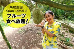 【終了】6/24  タイの果物が食べ放題!『Suan Lamai』&虎と触れ合える『シーラチャータイガーズー』、シャコやエビなどシーフードを楽しむ贅沢ツアー!